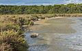 Bois des Aresquiers, Vic-la-Gardiole, Hérault 03.jpg