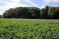 Bois du Pottelberg - Pottelbergbos 06.jpg