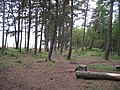 Bonaly Woods - geograph.org.uk - 976640.jpg