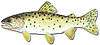 Drawing of Bonneville cutthroat trout