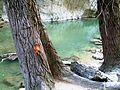 Bosco di Frasassi Ancona fiume e alberi.JPG