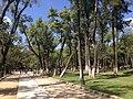 Bosque Cuauhtemoc Morelia, Mexico.JPG