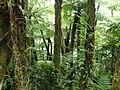 Bosque de Helechos - panoramio.jpg