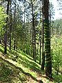 Bosque de Oma (27).JPG