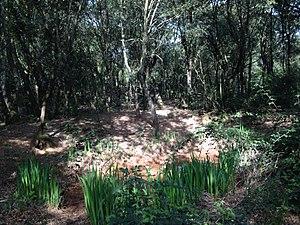 Bosque en S.Llorenç del Munt.jpg