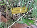 BotanicGardensPisa (35).JPG