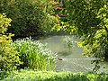 Botanisk Have (sø).jpg