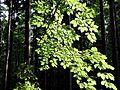 Branch (1).jpg