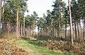 Brede High Wood - geograph.org.uk - 386149.jpg