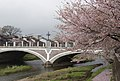 Bridge and sakura on the Asanogawa River (2439403159).jpg