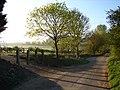 Bring me sunshine - geograph.org.uk - 2353431.jpg