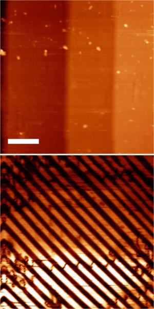 Piezoresponse force microscopy - PFM of BaTiO<sub>3</sub> single crystal showing simultaneously acquired topography (top) and domain structure (bottom). The scale bar is 10 μm