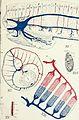 Bulletin (1900) (14587375418).jpg