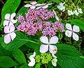 Butchart Gardens - Victoria, British Columbia (28426148553).jpg