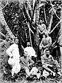 COLLECTIE TROPENMUSEUM Portret van personeel van het Proefstation in Salatiga bij een ingekerfde rubberboom TMnr 10024018.jpg