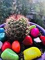 Cacti plant.jpg