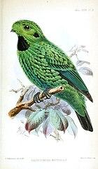 Изображение зеленой птицы с черными пятнами на горле и ушах и многочисленными черными крапинками по всему оперению.