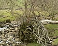 Cam Beck, with fallen tree - geograph.org.uk - 398345.jpg