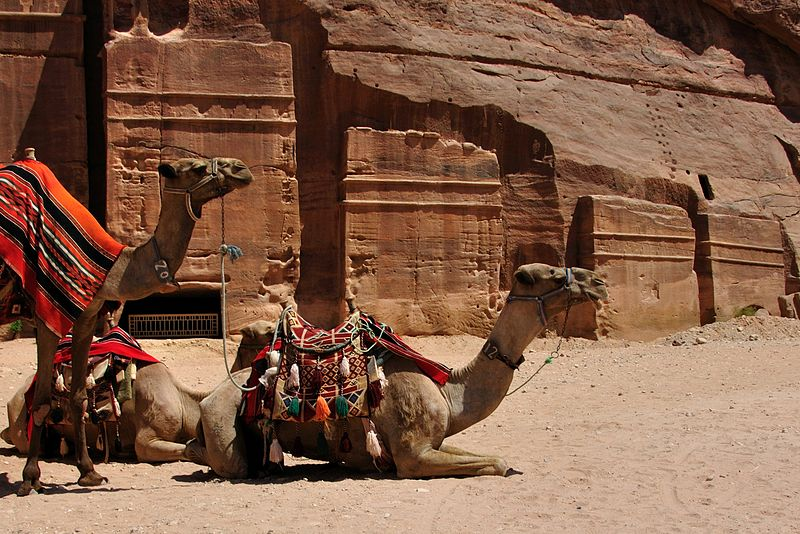 File:Camels at Petra, Jordan (6148175914).jpg