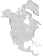 Canotia holacantha range map 0.png