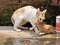 Cats (Kittens).jpg
