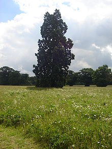 Catton Park Old Catton Norwich Wikipedia