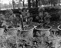 Charles A. Sprague Tree Seed Orchard Dedication Ceremony (19396765360).jpg