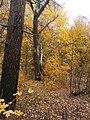 Cherkas'kyi district, Cherkas'ka oblast, Ukraine - panoramio (341).jpg