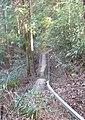 Chihaya Castle06.jpg