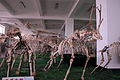 Chinese fossil mammals.jpg