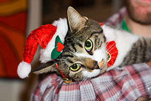 Tortured Cat in Christmas 2007