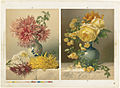 Chrysanthemums and Mareshal Niel Roses (Boston Public Library).jpg