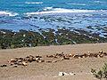Chubut-PeninsulaValdes-SeaLions-P2230742b.jpg