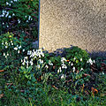Church of St Mary, Stapleford Tawney, Essex, England - snowdrops 2.jpg
