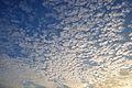 Cirrocumulus stratiformis - Clouds - Kolkata 2013-11-16 0625.JPG
