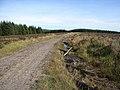 Cock Play, Spadeadam Forest - geograph.org.uk - 241581.jpg