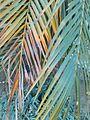 Coconut leaf image.jpg
