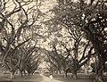 Collectie Nationaal Museum van Wereldculturen TM-60062121 Laan met koeboonbomen() in Port od Spain Trinidad en Tobago fotograaf niet bekend.jpg