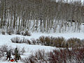 Colorado National Guard conducts Snow Response Training 150128-Z-IM587-254.jpg