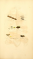 Coloured Figures of English Fungi or Mushrooms - t. 389.png