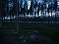 Coniferous forest in Sweden near the Svartälven river 03.jpg