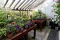 Conservatory potting area Quex House Birchington Kent England.jpg