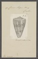 Conus augur - - Print - Iconographia Zoologica - Special Collections University of Amsterdam - UBAINV0274 087 01 0020.tif