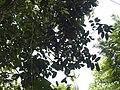 Costa Rica (6093428637).jpg