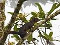 Costa Rica DSCN2668-new (31093411056).jpg