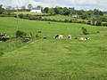Country scene at Ballymaconaghy - geograph.org.uk - 441062.jpg
