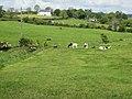 Country scene at Ballymaconaghy - geograph.org.uk - 441062.jpg