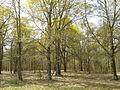 Cowpens National Battlefield - woods.jpg