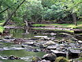 Crabtree Creek Mill Trail Umstead SP 3323 (5893857045) (2).jpg