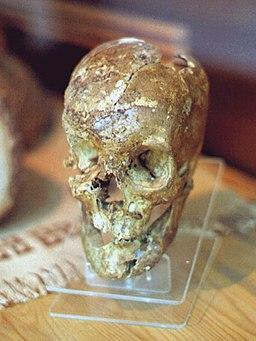 Cranium, Paleolithic, MACA, 3083